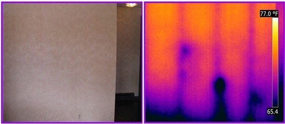 infrared detects termites